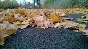 Bawarska jesień Zdjęcie Royalty Free