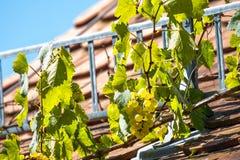 Bawarska winorośl na dachu fotografia stock