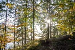 Bawarski las zdjęcie stock