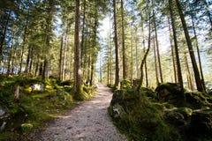 Bawarski las Przy Berchtesgaden Nationalpark Obrazy Stock