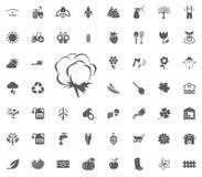 bawełniana ikona Uprawiający ogródek i narzędzie wektorowe ikony ustawiać Obraz Stock