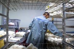 Bawełniani Klasyfikacyjni laboratoria obraz stock