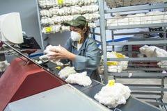 Bawełniani Klasyfikacyjni laboratoria zdjęcie royalty free