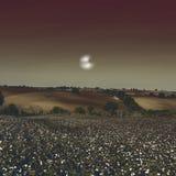 Bawełny pole w tajemniczym świetle Obrazy Royalty Free