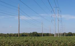 Bawełien linie energetyczne i pole Obrazy Royalty Free