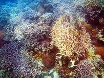 Bawe island reef Royalty Free Stock Photos