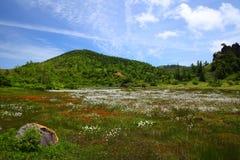 Bawełniana trawa i góra Obrazy Stock