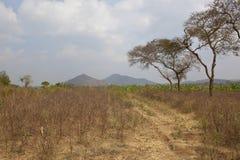 Bawełniani pola Karnataka Zdjęcie Stock