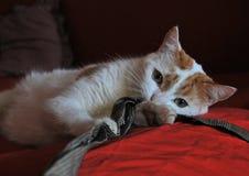 Bawić się kota fotografia royalty free