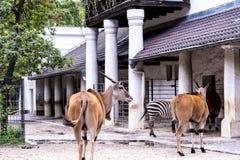 Bawić się kryjówkę aport w Zoologicznych ogródach w Niemcy - i - Obraz Royalty Free