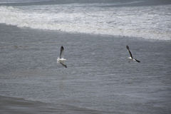 Bawić się nad morzem zdjęcia royalty free