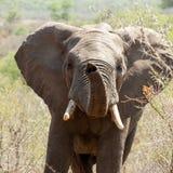 Bawić się słonia Zdjęcie Stock