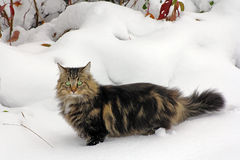 Bawić się w śniegu daje przyjemności Zdjęcia Stock