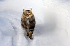 Bawić się w śniegu daje przyjemności Fotografia Royalty Free