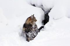 Bawić się w śniegu daje przyjemności Zdjęcie Royalty Free