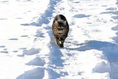 Bawić się w śniegu daje przyjemności Obrazy Stock