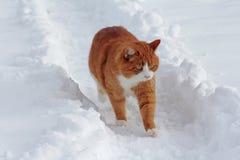Bawić się w śniegu daje przyjemności Zdjęcia Royalty Free