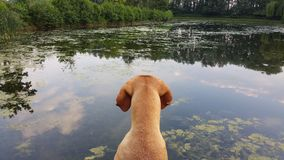 Bawić się z psami zdjęcia stock