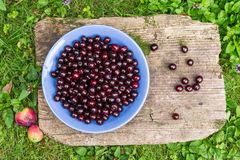 A bawl of fresh garden cherries. On the groung in the garden stock photography