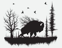 Bawoli odprowadzenie w lesie ilustracja wektor