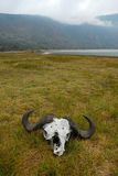 Bawolia czaszka w Empakai kraterze, Wielki rift valley, Tanzania, Wschodni Afryka Zdjęcia Royalty Free