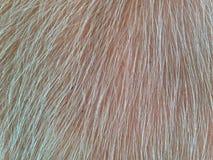 Bawolia skóra Fotografia Stock