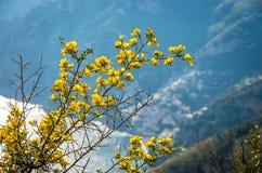 Bay by the Amalfi Coast in Italy royalty free stock photo
