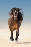 Bay beautiful pony Stock Photography