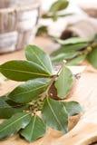 Bay. Branch of laurel. Stock Image