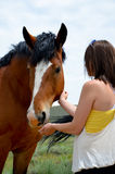 Bay Draft Horse and woman Royalty Free Stock Images