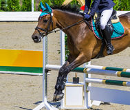 Bay dressage horse and girl performing jump at show jumping competition. Equestrian sport background. Bay horse portrait during dressage competition Stock Photo