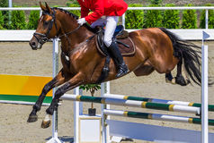 Bay dressage horse and rider in red jacket performing jump at show jumping competition. Equestrian sport background. Bay horse portrait during dressage Royalty Free Stock Photos
