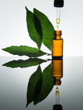 Bay essential oil, bay oil, bay leaf, amber glass bottle, dropper Royalty Free Stock Photos