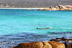 Bay of Fires out for a dive for abalone Royalty Free Stock Image
