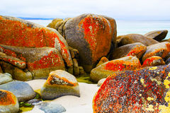 Bay of fires. In Tasmania stock images