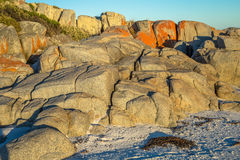 Bay of Fires Tasmania Royalty Free Stock Photos