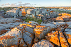 Bay of Fires. Scenic red rocky at Bay of Fires Consevation Area ranging from Binalong Bay to Eddystone Point, east coast of Tasmania in Australia Royalty Free Stock Photos