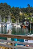 The bay at Fort Bragg California with fishing boats moored and a house up on the hill in the pines - selective focus.  stock photo