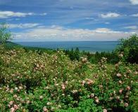 Bay of Fundy. New Brunswick, Canada Stock Image