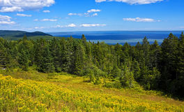 Bay of Fundy panorama. Panorama of the Bay of Fundy with wildflowers and forest as seen from Fundy National Park, New Brunswick, Canada Stock Image