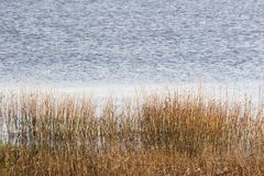 Bay Grass. Long grass grows at the water's edge Stock Images