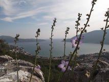 The Bay of Herceg Novi and Igalo royalty free stock photography