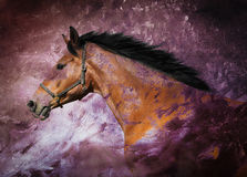 Bay horse. Portrait of a bay horse over purple texture Stock Images