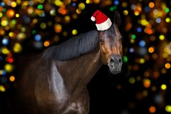 Bay horse in Christmas hat stock photo
