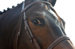 Bay horse close up. Close up of part of the face of a bay horse with a leather bridle and mane in braids Stock Photo