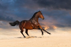 Bay horse in desert Stock Photos
