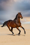 Bay horse in desert Royalty Free Stock Images