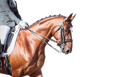Bay horse: dressage - with clipping path Stock Image
