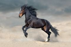 Dark horse run. Bay horse in dust run fast against blue sky stock photography