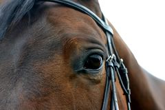 Bay horse eye. A close-up of the eye of a bay horse royalty free stock photos